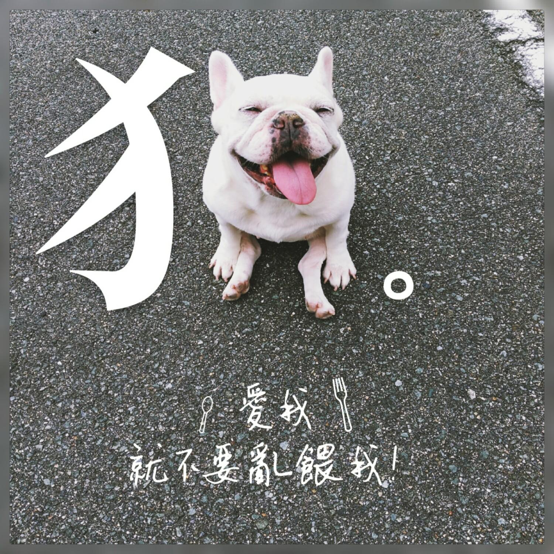 【知識】狗狗誤食異物,怎麼辦?狗狗吃玉米梗,100%無法消化。