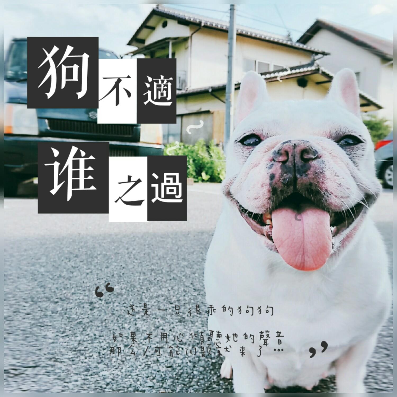 【知識】狗狗飲食必要六大營養素,營養均衡手作鮮食才算健康飲食!